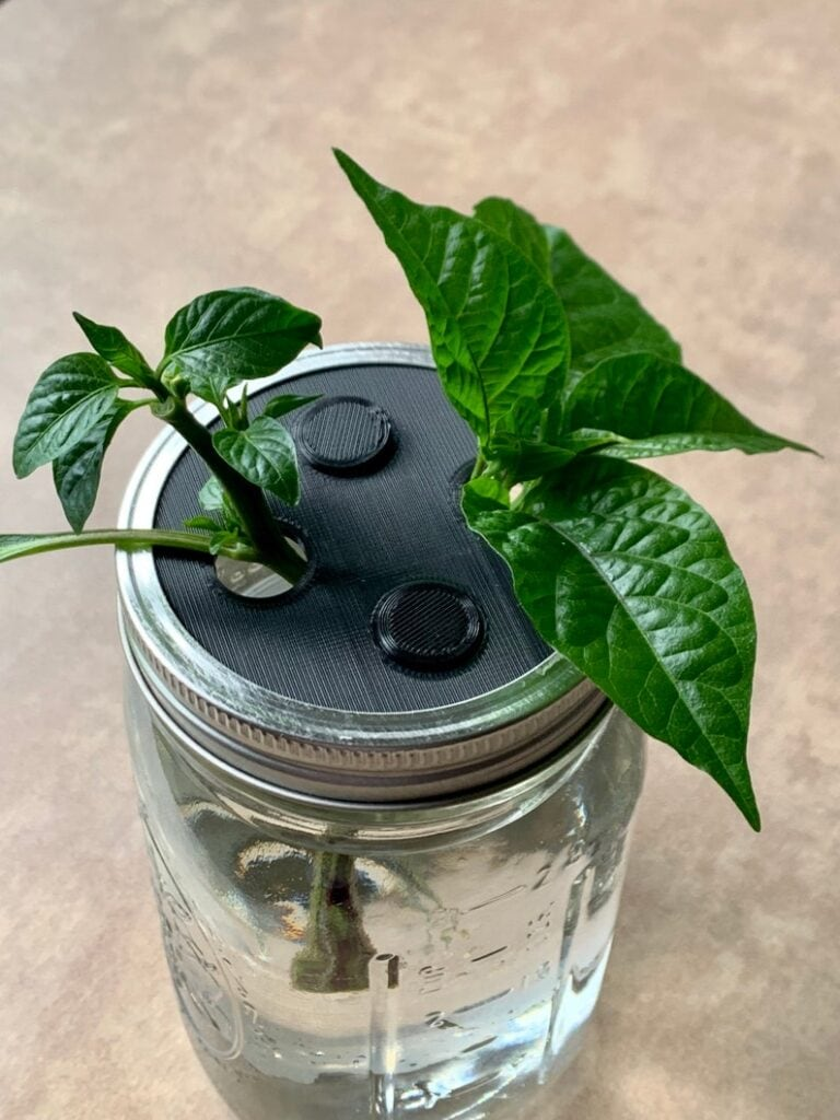 propogation lid for wide mouth mason jar